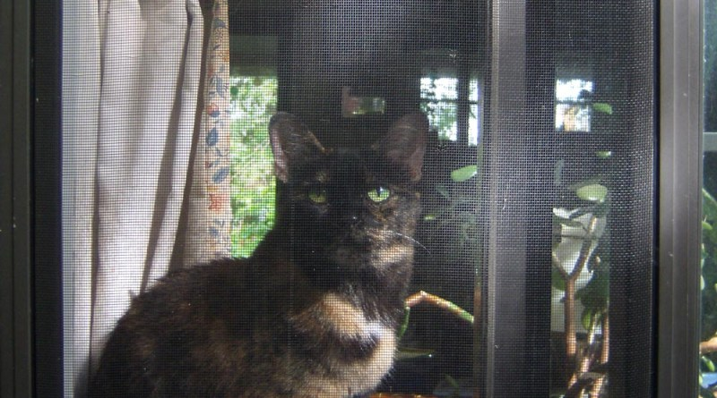tortoiseshell cat in window