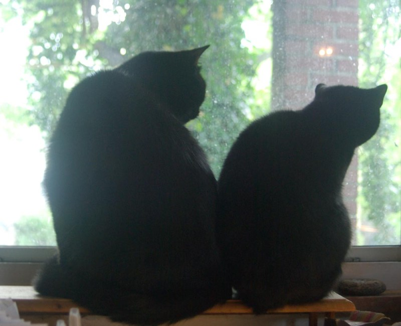 Two black cat silhouettes looking out the window