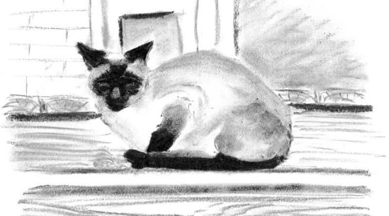 charcoal sketch of siamese cat