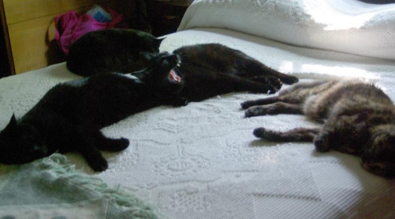 four cats sleeping on the bed