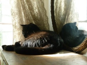 black cat in front of round mirrir with lace curtain