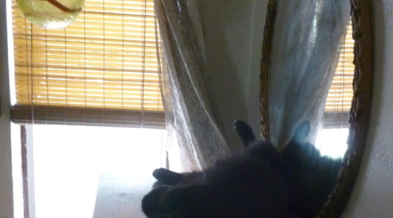 black cat on top of table in front of window