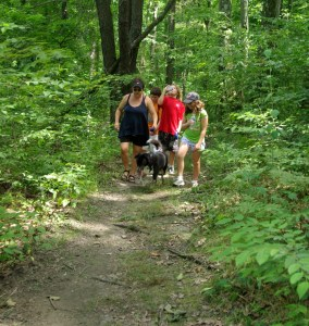 people with dogs along trail