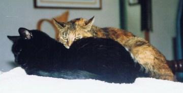 torbie cat with black cat
