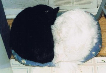 black and white cats sleeping