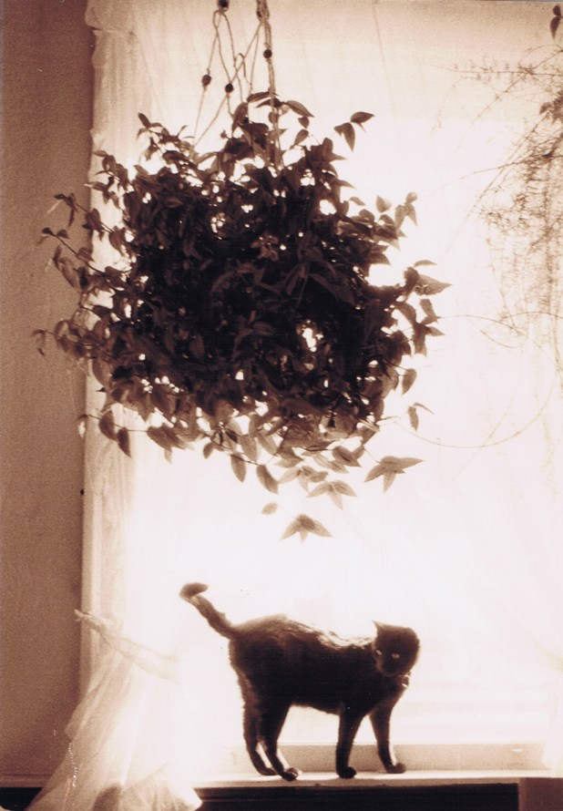 black and white photo of black cat with plant