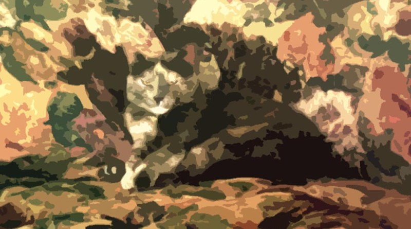 cat on patterned background