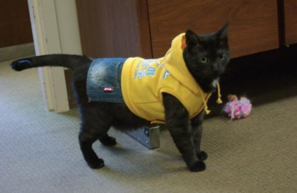 cat wearing costume