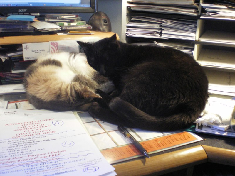 black cat sleeping on dilute calico