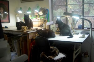 photo of five cats in studio