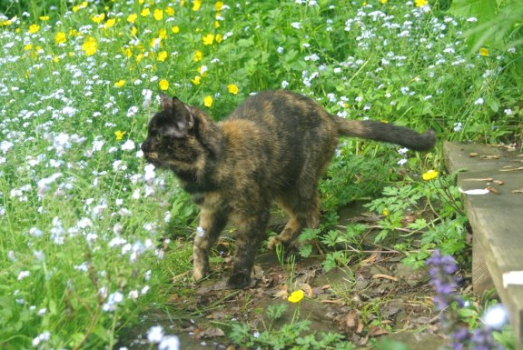 tortoiseshell cat with grass and flowers