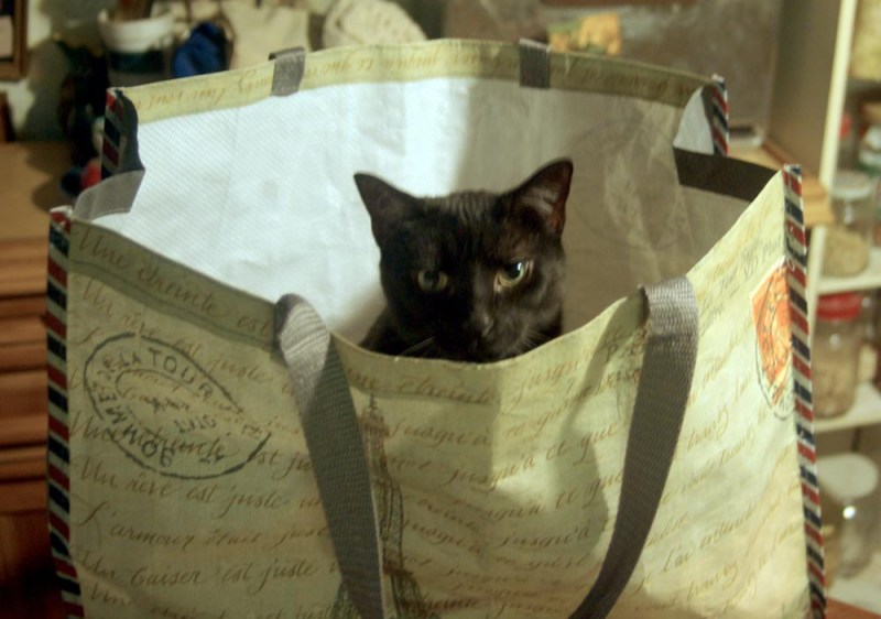 black cat in shopping bag
