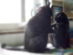 two black cats talking