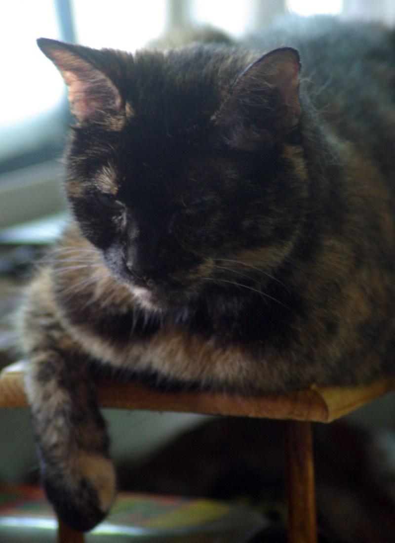 tortoiseshell cat sleeping on shelf