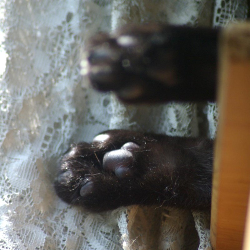 two black cat toes