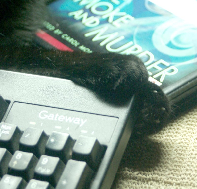front paws of black cat wrapped around keyboard
