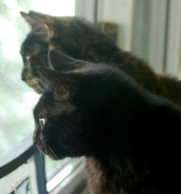 two cats looking out window