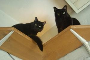 two black cats on shelf