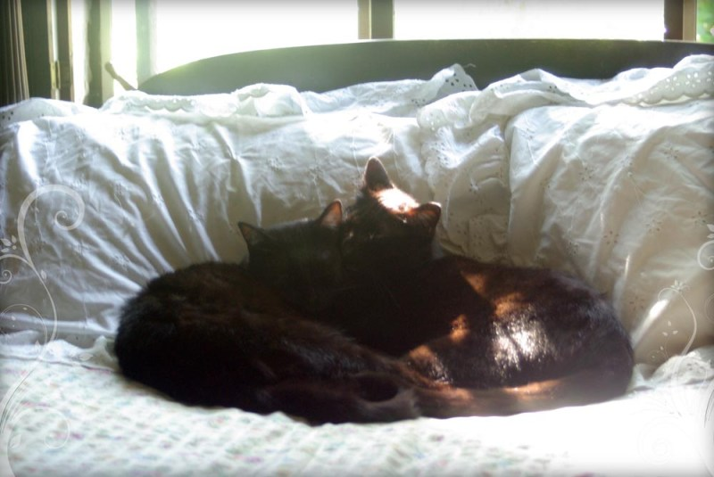 two black cats cuddling on bed
