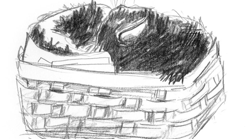 pencil sketch of cat tucked in basket