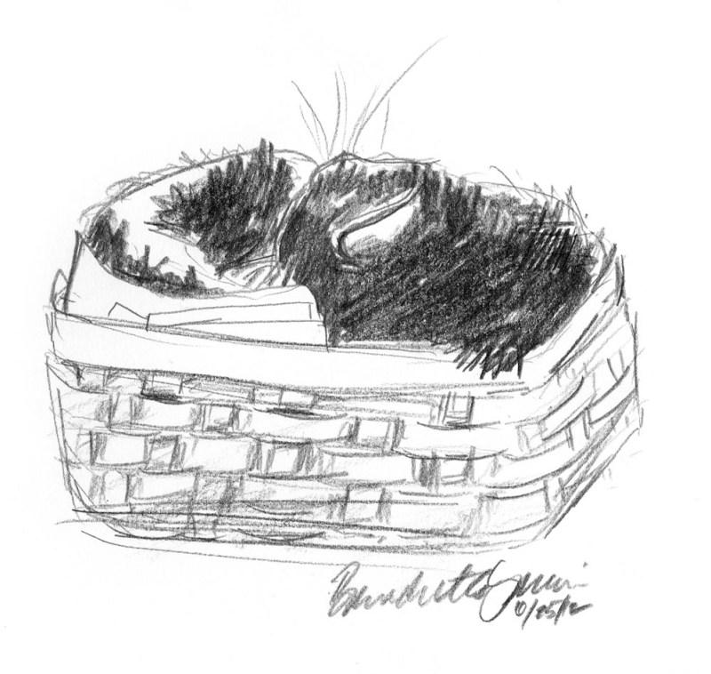 pencil sketch of cat tucked in basket