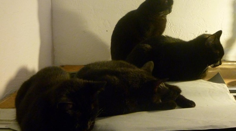 four black cats in dim light