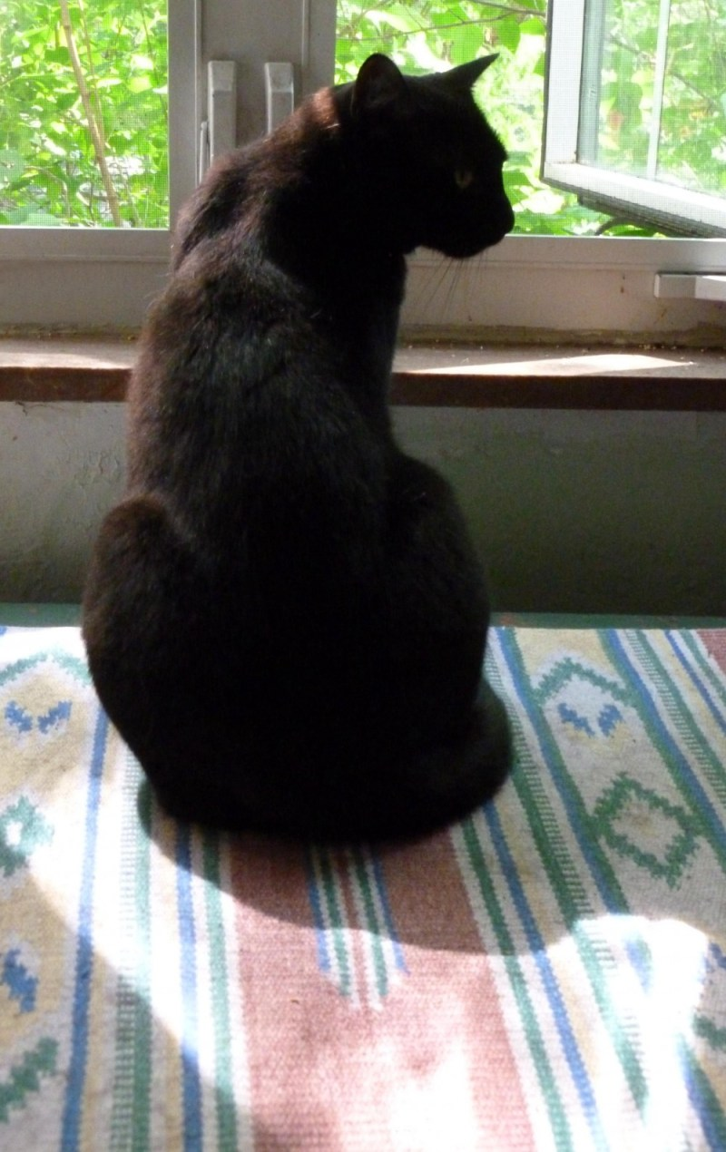 black cat in front of window