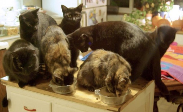 seven cats on cabinet