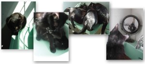 set of four cards with black cats