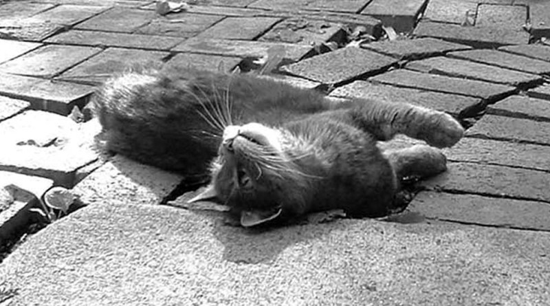 gray cat on bricks