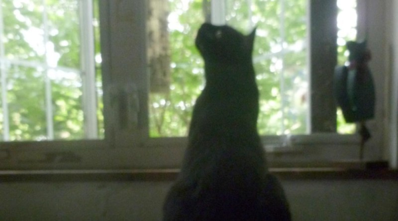 black cat by window