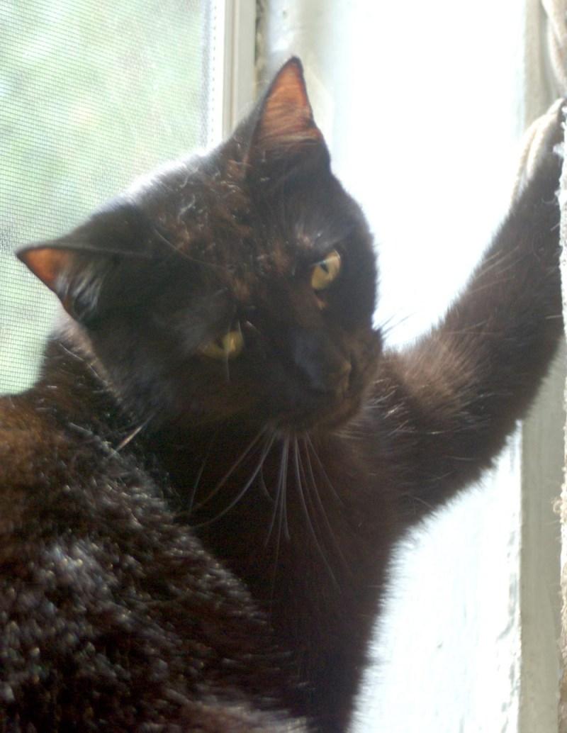 black cat looking innocent