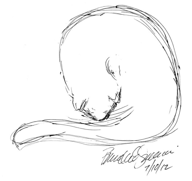 gel pen sketch of cat bathing