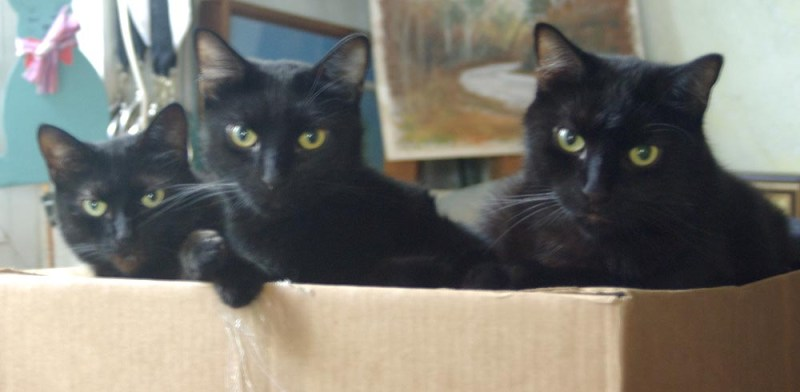 three black cats on box