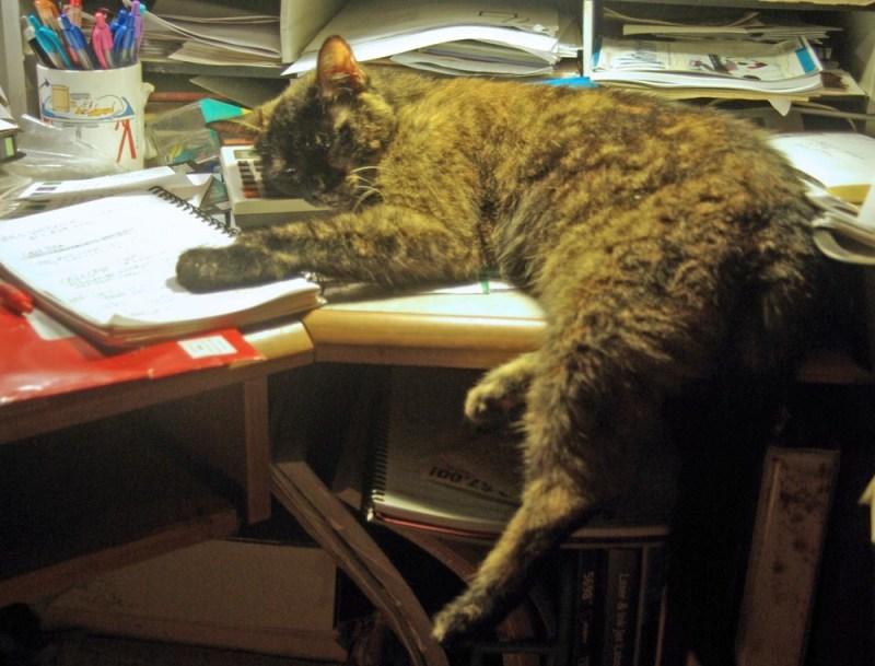 cat sleeping on desk with head on calculator
