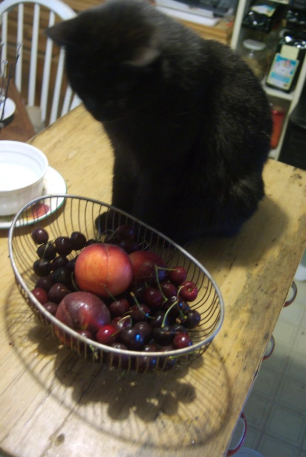 black cat with fruit bowl of cherries and peaches