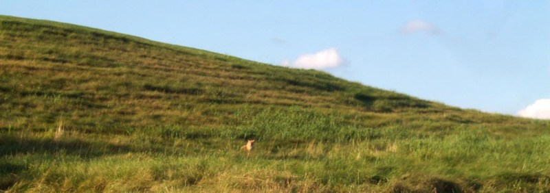 stray cat in field