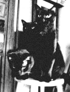 Three black cats looking cool.