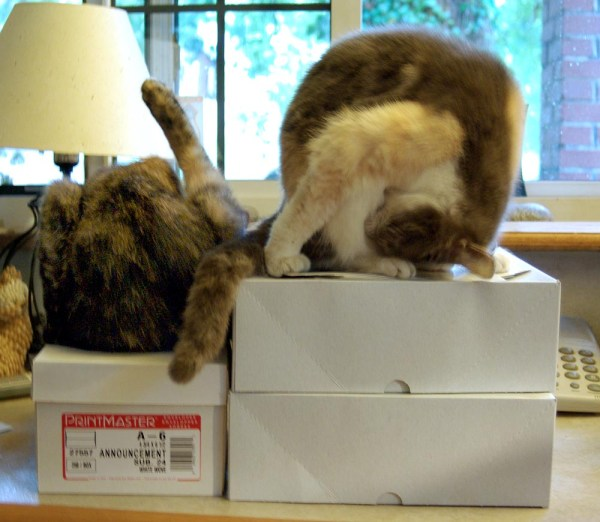 two cats bathing on boxes