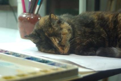 tortoiseshell cat with palette