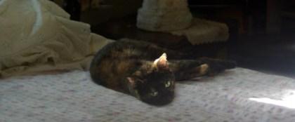 tortoiseshell cat on bed
