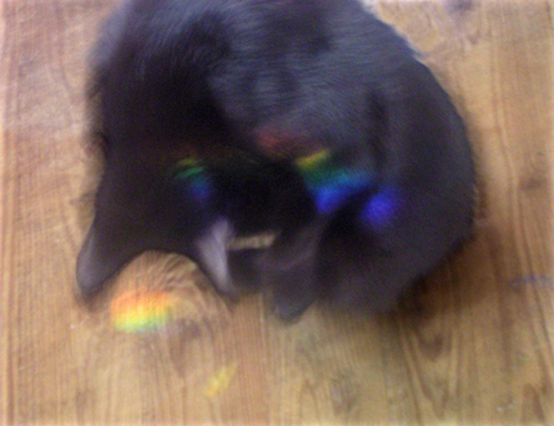 black cat with rainbows reflected on wooden floor