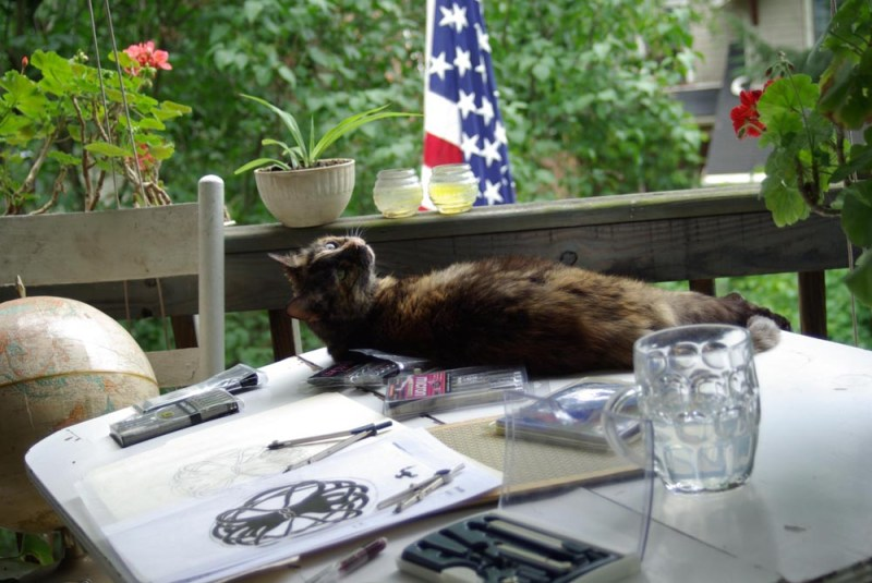 cat on table outdoors with flag