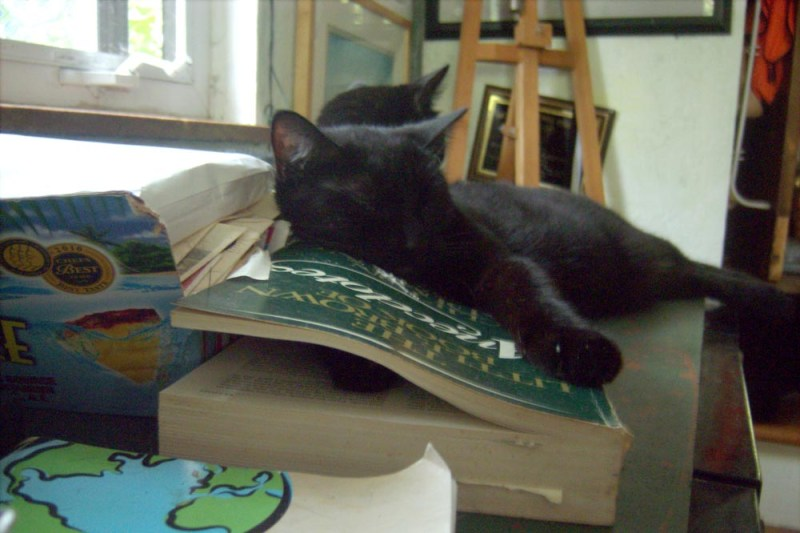 black cat sleeping with a paw in a book