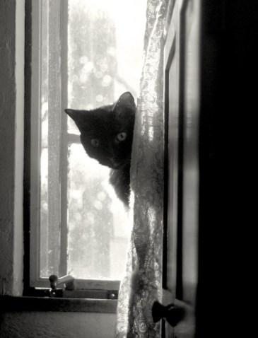 black cat peeking around curtain