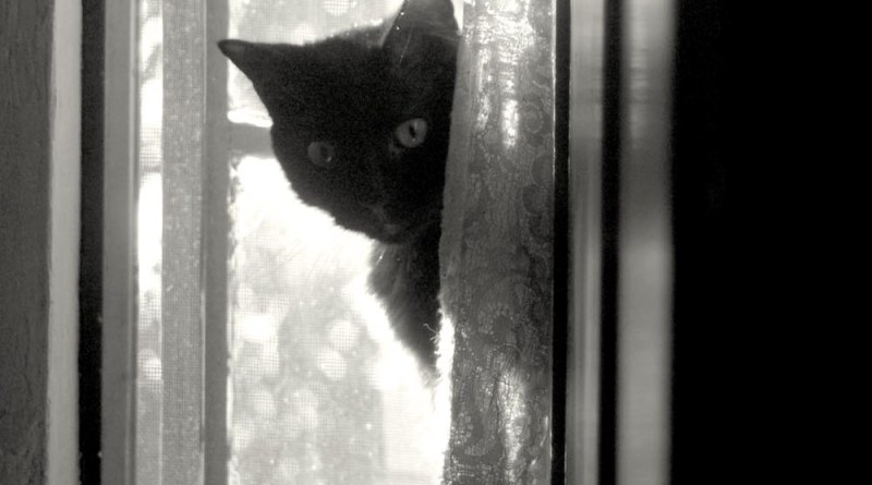 black cat peeking around curtain