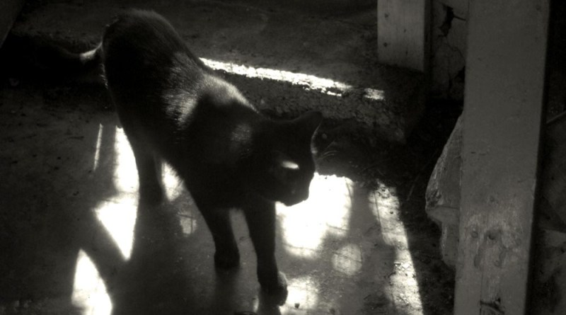 black and white photo of cat in light and shadow