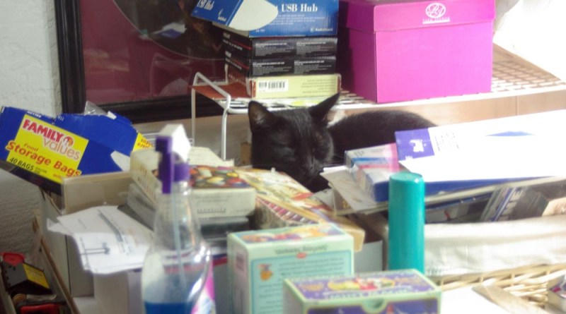 black cat in the middle of stuff