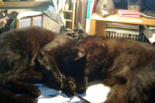 two black cats cuddling on desk