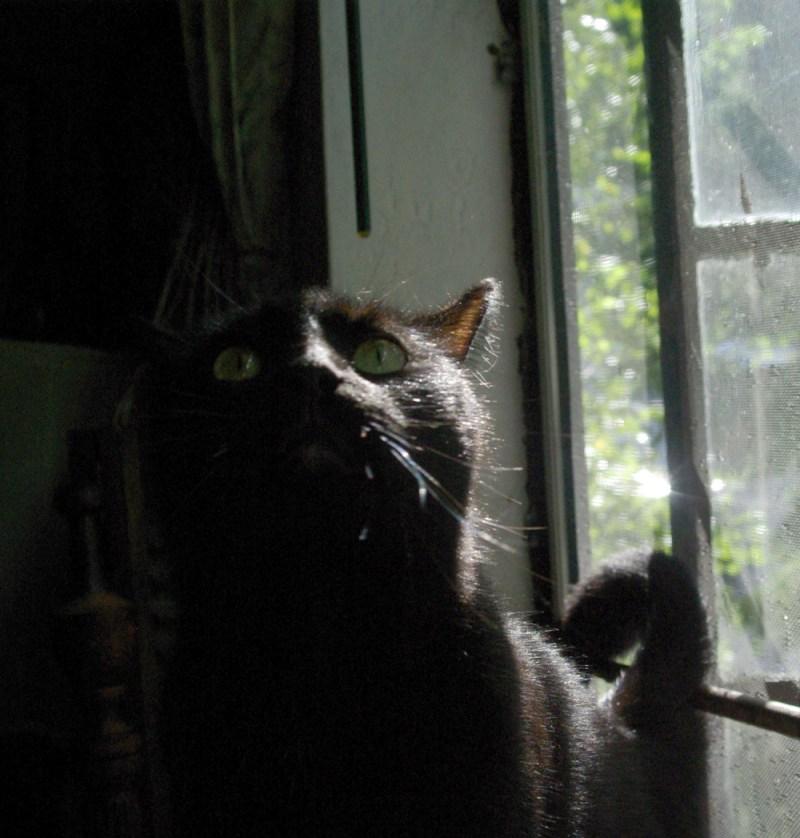 black cat considering a jump